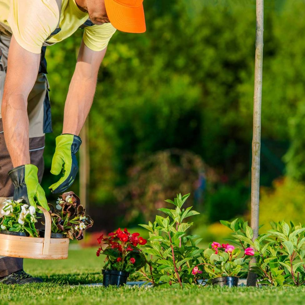 bs_gardening